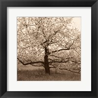 Framed Apple Tree in Bloom