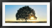 Framed Lonely Tree