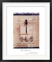 Framed Dragon Fly
