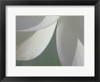 Lotus Detail I Framed Print