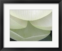 Lotus Detail V Framed Print