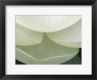 Lotus Detail V Framed Print