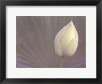 Lotus Detail VI Framed Print