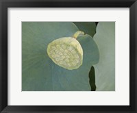 Lotus Detail VIII Framed Print