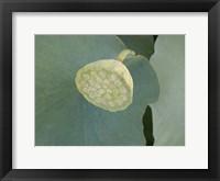 Lotus Detail VIII Framed Print