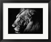 Framed Wildlife Scratchboards I