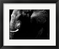 Framed Wildlife Scratchboards III