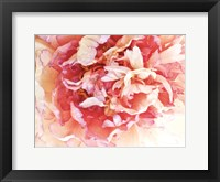 Framed Monet's Peony II