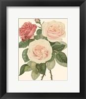 Framed Vintage Roses II