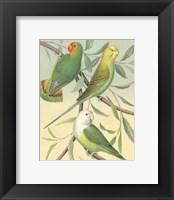 Framed Parakeets I