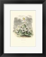 Framed Le Fleur AnimT III