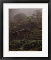 Framed Rejuvenate - Tea Plantation