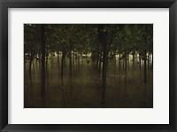 Framed Revitalize - Forest