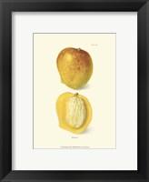 Framed Mango