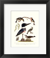 Framed Small Antique Kingfisher I