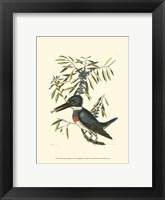 Framed Small Antique Kingfisher II