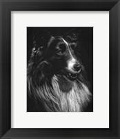 Framed Canine Scratchboard VII