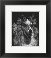 Framed Canine Scratchboard VIII