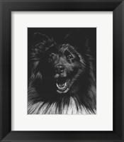 Framed Canine Scratchboard IX