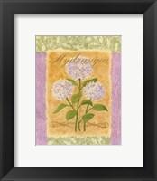 Framed Sweet Hydrangea