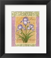 Framed Sweet Iris