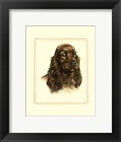 Framed Red Cocker Spaniel
