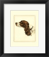 Framed Cocker Spaniel