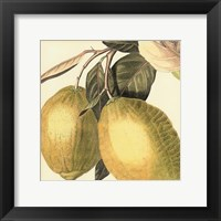 Graphic Lemon Framed Print