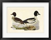 Framed Duck I