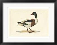 Framed Duck II