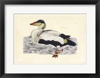 Framed Duck III