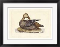 Framed Duck IV