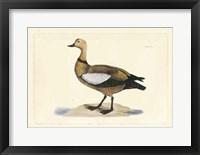 Framed Duck V