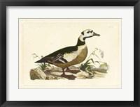 Framed Duck VI