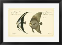 Framed Antique Fish IV