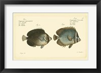 Framed Antique Fish V