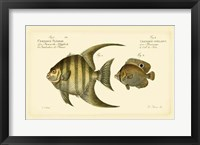 Framed Antique Fish VI
