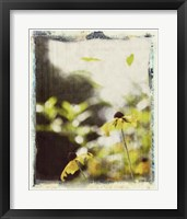 Framed Blackeyed Susans III