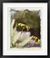 Framed Blackeyed Susans IV