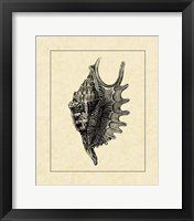 Framed Vintage Shell III