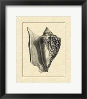 Framed Vintage Shell IV