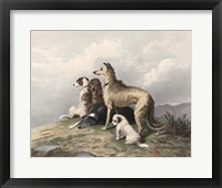 Framed Highland Dogs