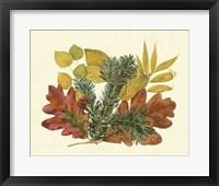 Framed White Oak, Balsam Fir & Yellow Birch