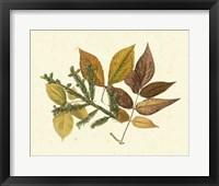 Framed Elm, Spruce, Beech & Ash