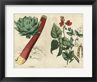 Kitchen Vegetables & Roots II Framed Print