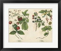 Kitchen Fruits II Framed Print