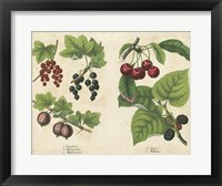 Kitchen Fruits III Framed Print