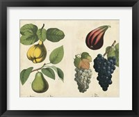 Kitchen Fruits IV Framed Print