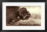 Framed Wild Turkey