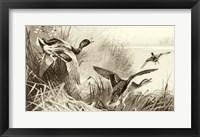 Framed Ducks
